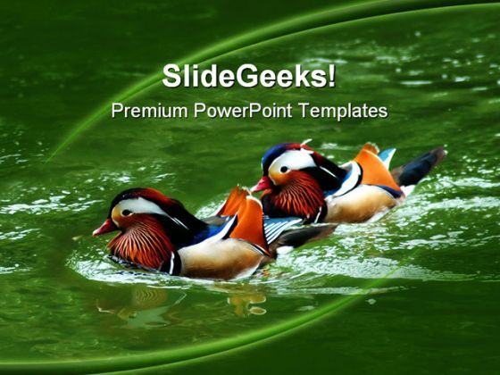 Awesome Colored Ducks Animals PowerPoint Templates And PowerPoint Backgrounds 0211  Presentation Themes and Graphics Slide01