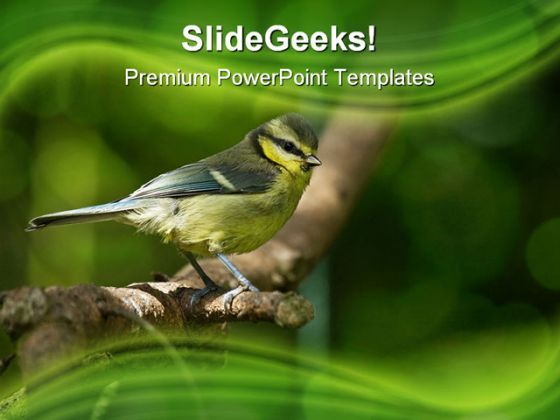 Blue Tit Fledgling Nature PowerPoint Templates And PowerPoint Backgrounds 0211  Presentation Themes and Graphics Slide01
