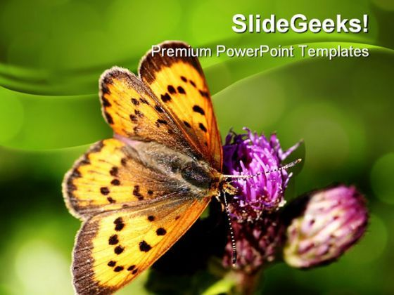 Butterfly Nature PowerPoint Templates And PowerPoint Backgrounds 0211  Presentation Themes and Graphics Slide01