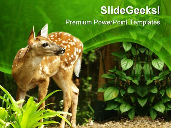 Deer Animals PowerPoint Templates And PowerPoint Backgrounds 0411  Presentation Themes and Graphics Slide01