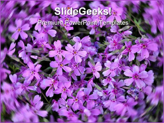 Purple Flowers Nature PowerPoint Templates And PowerPoint Backgrounds 0211  Presentation Themes and Graphics Slide01