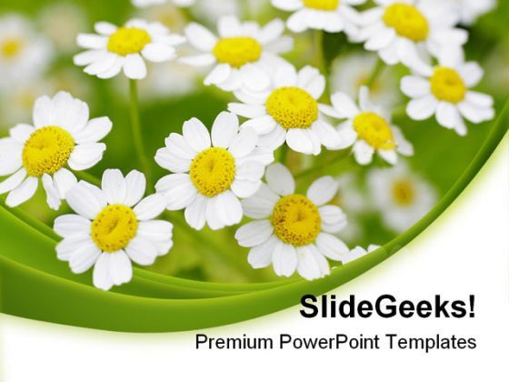 Summer Time Daisies Nature PowerPoint Templates And PowerPoint Backgrounds 0311  Presentation Themes and Graphics Slide01