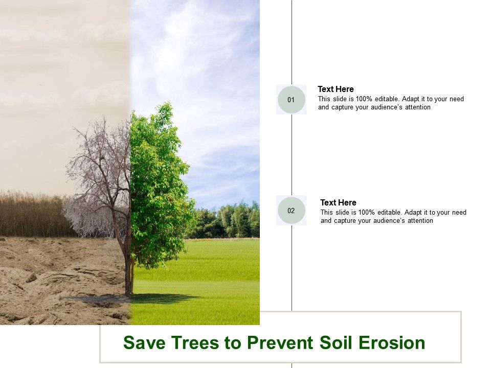 Save Trees To Prevent Soil Erosion
