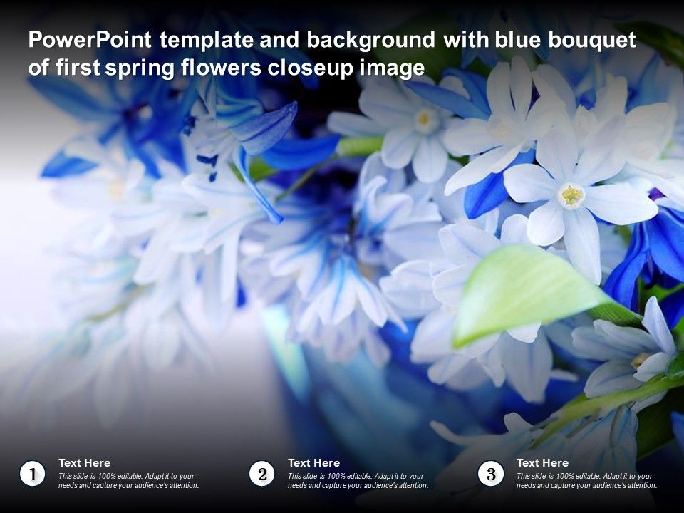 Template Background With Blue Bouquet Of First Spring Flowers Closeup Image Ppt Powerpoint