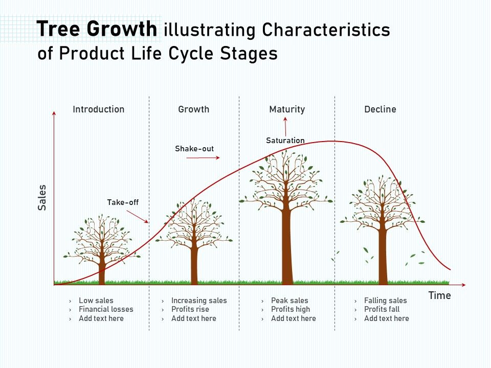 Tree Growth Illustrating Characteristics Of Product Life Cycle Stages