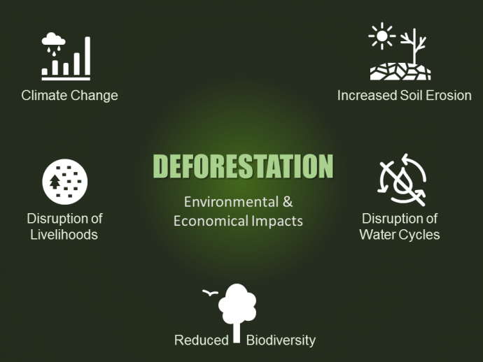 Deforestation impact on environment